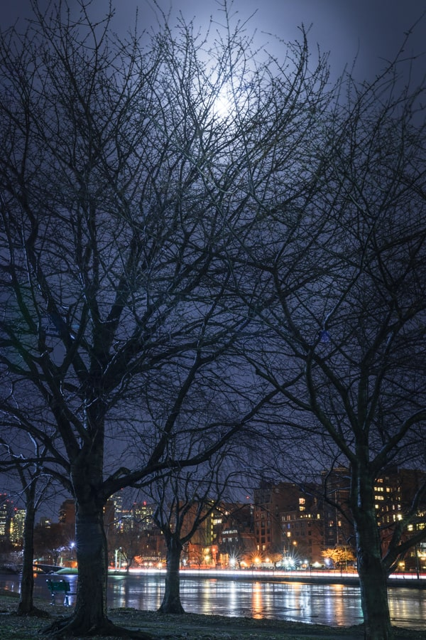 Boston Spooky Trees on the Charles - Sarah Kozak Photography