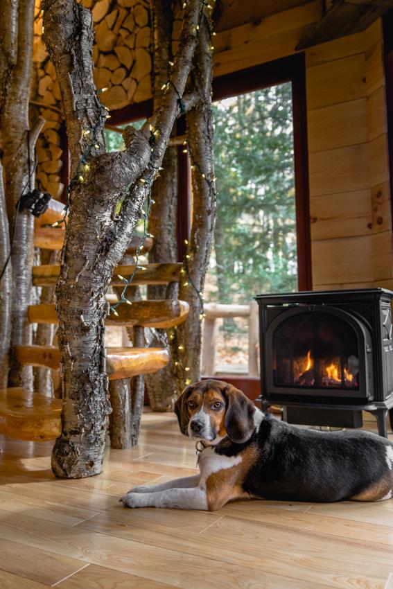 Wally at Vermont Tree Cabin- Cozy- Sarah Kozak Photography